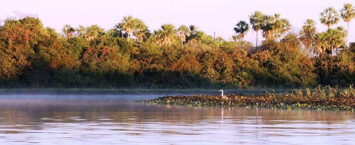 Organizan taller del plan de gestión sostenible y participativa para el Pantanal imagen